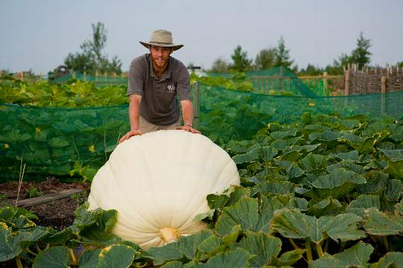 Visit the giant pumpkin spectacle at RHS Garden Hyde Hall